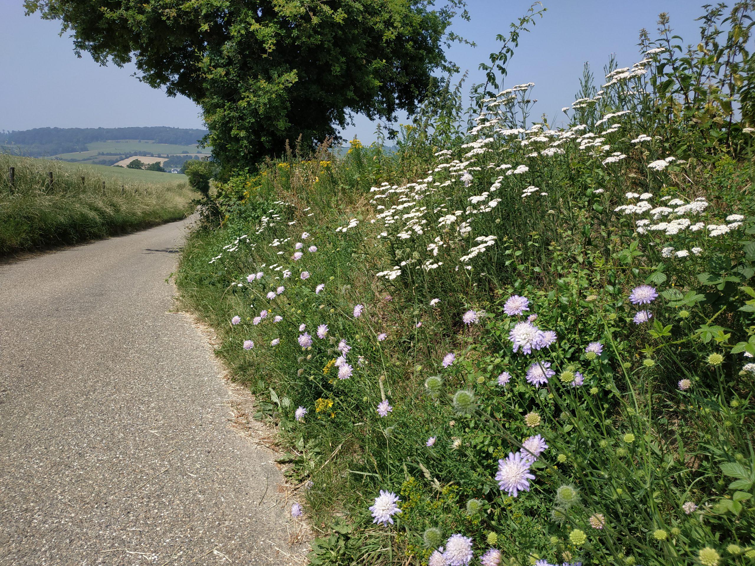Ook wegbermen in het Geuldal bevatten veel soorten bloeiende planten. Foto M.F. van der Schee